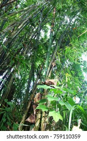 Photo for bamboo forest