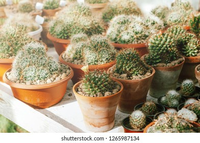 Photo of bautiful green cactus or suculents