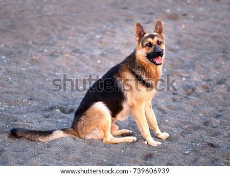 Photo of a beautiful big dog on a sandy beach