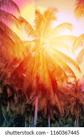 Photo beautiful of bright tropical coconut palms on a sunny island
