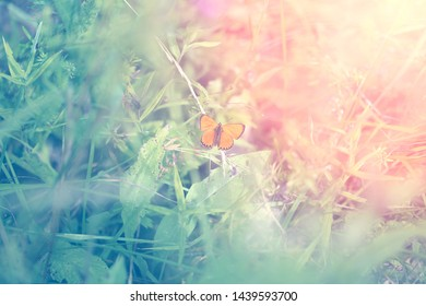 Photo of a Beautiful butterfly sitting on a flower
