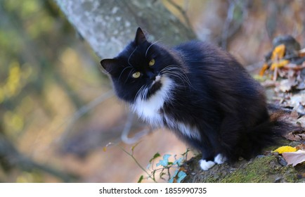 Photo of a beautiful cat in the autumn Sunny forest. Example of a cat for the design of a website or an autumn greeting card