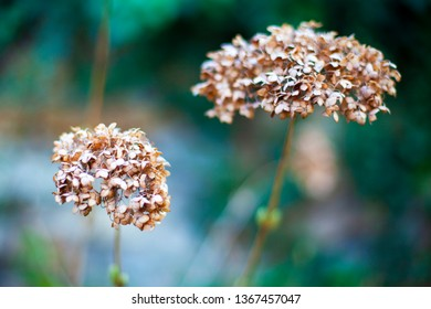 Photo of beautiful dried flowers. Close-up with blurred background.