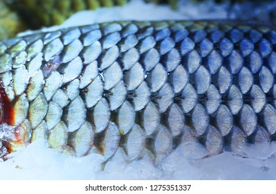 Photo of beautiful macro of large fish scales on a shop window in the ice