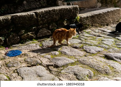 Photo of a beautiful orange cat sitting on a street during a sunny day