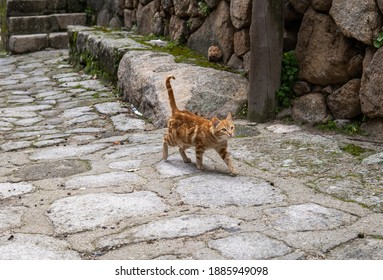 Photo of a beautiful orange cat walking on a street during a sunny day