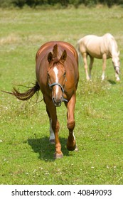 Photo of beauty horse on the green grass