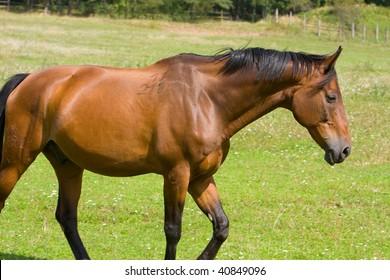 Horse Walking Field Stock Photo (Edit Now) 1121016974