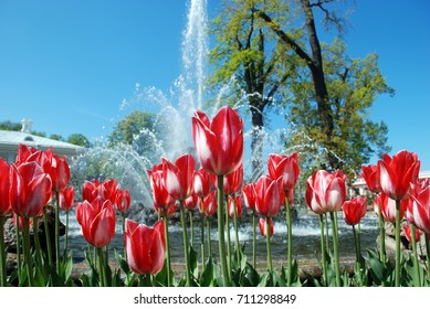 The photo a bed lawn beautiful flowers is a lot of tulips