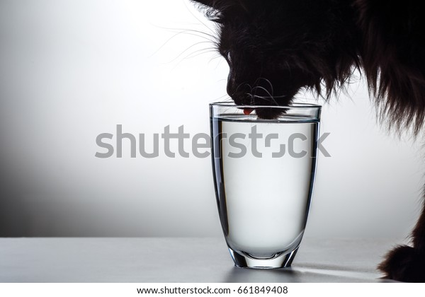 Photo of black cat drinking water from glass in studio