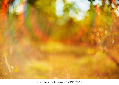 Photo of blurred field. Out of focus Summer/Autumn sunset.