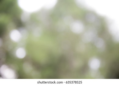 photo blurred garden background with sun light and bokeh