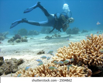 A photo of Branch coral with a diver in the background.