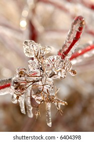 Photo of branches covered in ice after an ice storm.