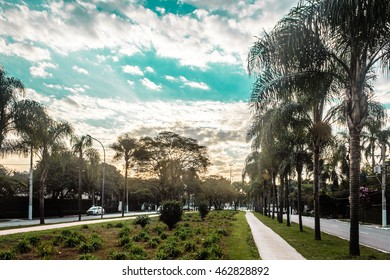 Photo of Brazilian Streets Full of Tropical Trees in San Paulo (Sao Paulo), Brazil (Brasil)