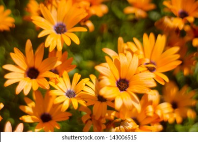 Photo with bright flowers