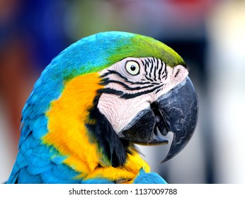 Photo of a bright macro parrot in a tropical jungle