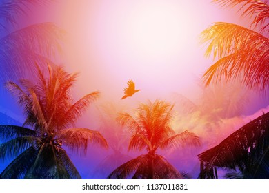 Photo of bright tropical coconut palms on a sunny island