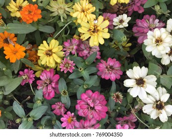A photo of a bunch of colourful flowers from bird view can be used for background
