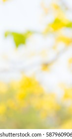 Photo by Lens defocus of Golden shower use as background.