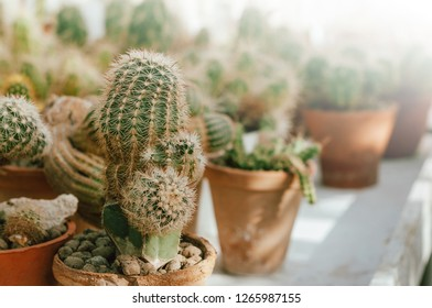 Photo of cactus or suculent in pots