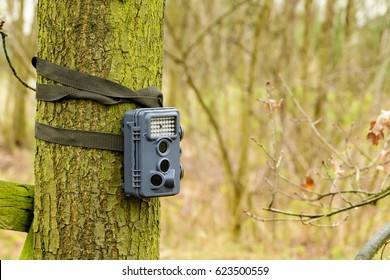 photo case in a tree