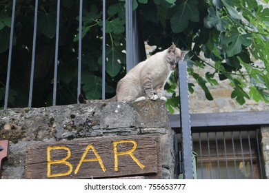 "Photo of cat leaning on the gate, taking advantage of the word ""bar"" to give the idea that the cat drank too much"