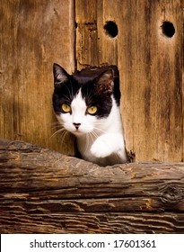 Photo: Cat peeking from Barn Door