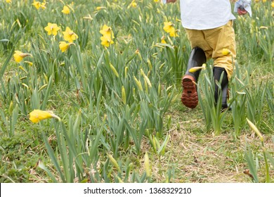 Photo of a child running in a field of flowers wearing rain boots.  The picture is of spring, he is wearing galoshes in the muddy garden. He has yellow pants in the daffodil field. Springtime fun!
