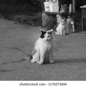 Photo of a close-up of a beautiful cat on a summer veranda
