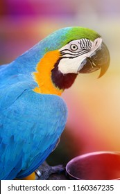 Photo of a close-up of a large blue macaw parrot lit by the sun in the park