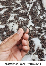 a photo of a coffee bean harvested by a farmer