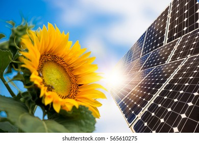 Photo collage of solar panels against the crops background -  concept of sustainable resources