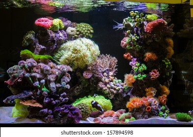 Photo of a coral colony