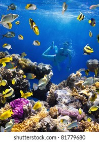Photo of a Coral colony, coral fish and young women on a coral reef