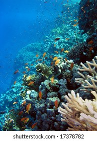 Photo of a coral colony, Red sea