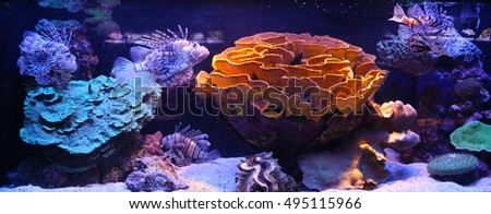 Photo of a coral colony, Red Sea, Israel