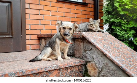 Photo of cute cat and dog lying outdoors on the porch