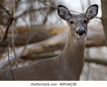 Photo of the cute deer looking straight to the camera