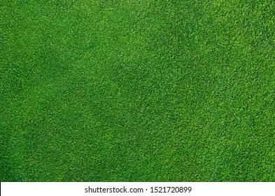Photo of a dense golf green top view