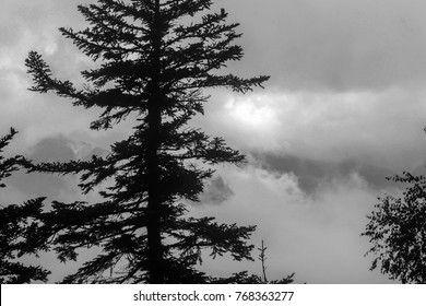 Photo devided by shadowed spruce. Black and white collored image.