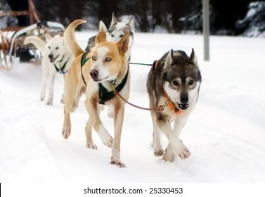 Photo of dog sled race in Toronto Area