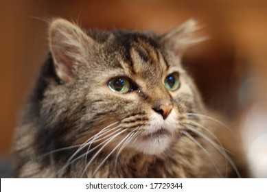 Photo of a domestic cat