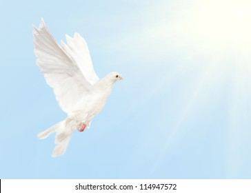 photo of dove flying in blue sky with sun