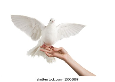 A photo of a dove on a woman's hand