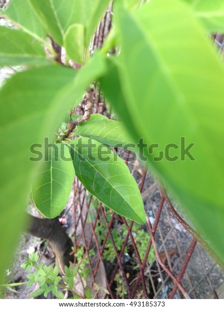 A photo of down leaves