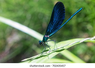 the photo of dragonfly close up
