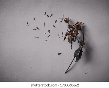 Photo of dried flower looks unique