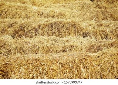 Photo of dry grass. Hay