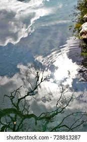 photo of dry tree reflection in mountain river